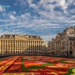 Flower Carpet Festival Bruxelles 2014 Belgium