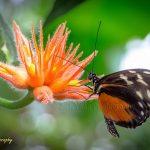 荷兰激情花公园里的蝴蝶