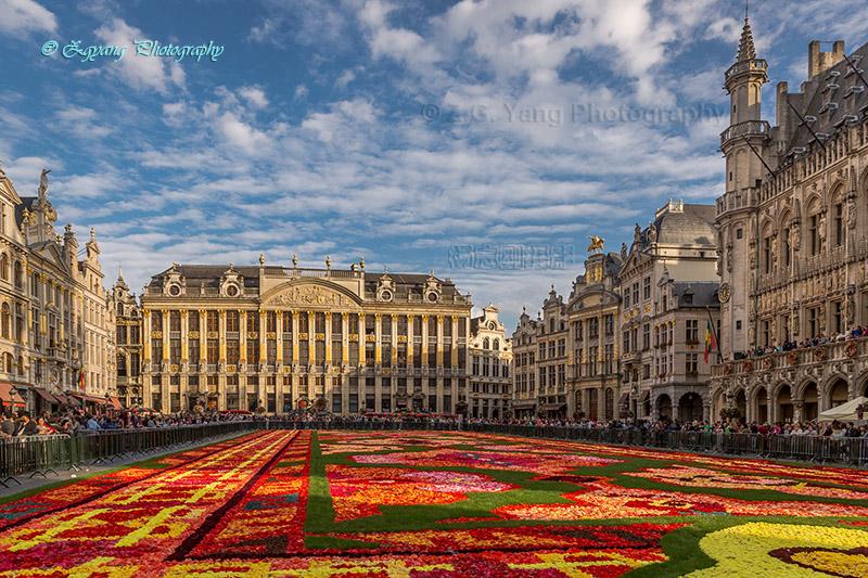 flower-carpet-2014