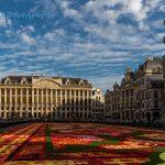 比利时布鲁塞尔2014花毯节