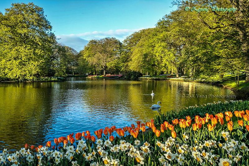 keukenhof-lake-and-tulipp-narcissus-fields